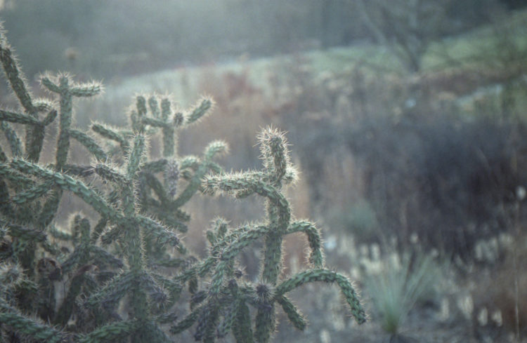 Cactaceae. Analog photograph by Katrin Mainusch.