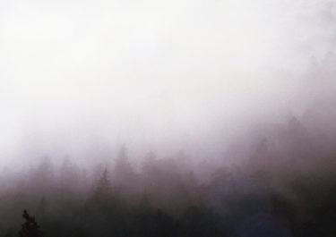 analogue landscape photography of a forest covered in fog - captured by Katrin Mainusch - friendmade.fm