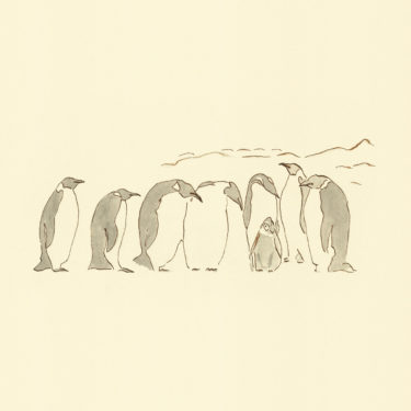 An Illustration with watercolour and ink with the title 'Penguins'.